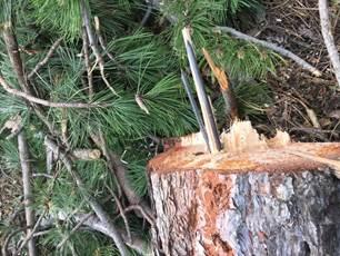 2016 06 arbres abimes